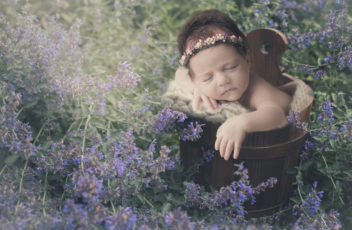 Babylavendel2